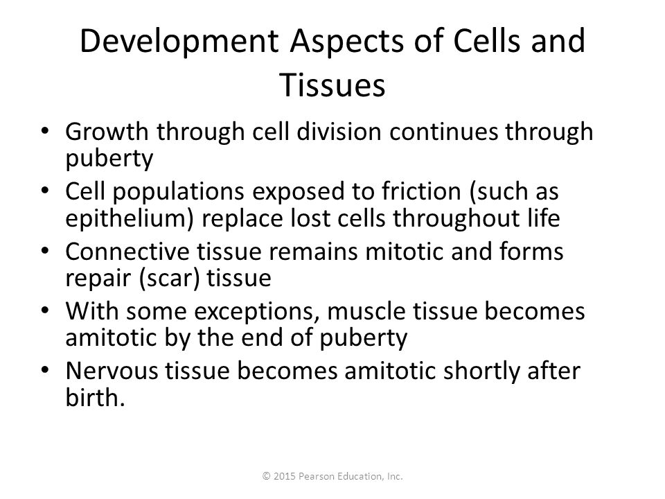 © 2015 Pearson Education, Inc. Development Aspects of Cells and Tissues Growth through cell division continues through puberty Cell populations expose