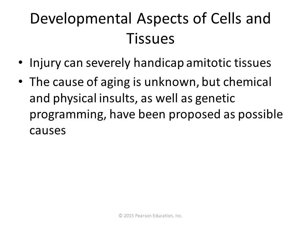 © 2015 Pearson Education, Inc. Developmental Aspects of Cells and Tissues Injury can severely handicap amitotic tissues The cause of aging is unknown,