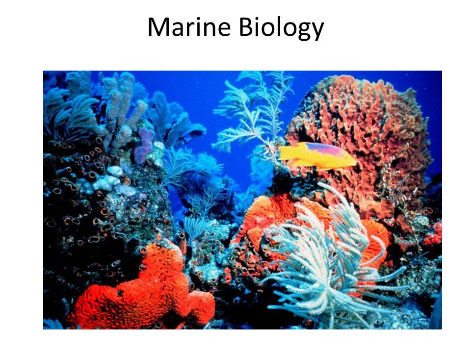 Basic Ecology F.