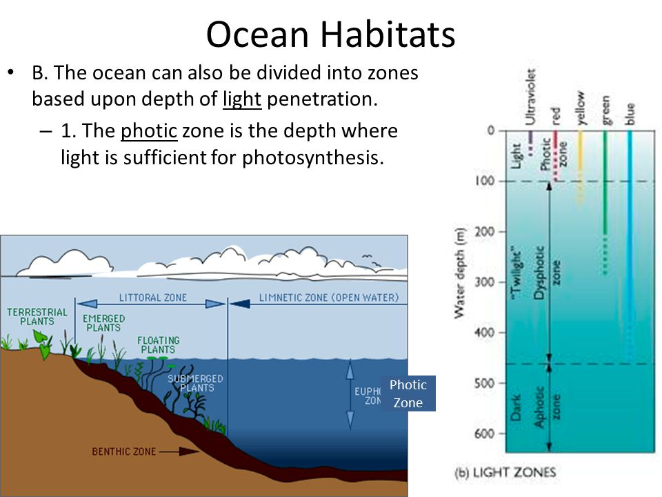 Ocean Habitats – 2.The dysphotic zone is where illumination is too weak for photosynthesis.