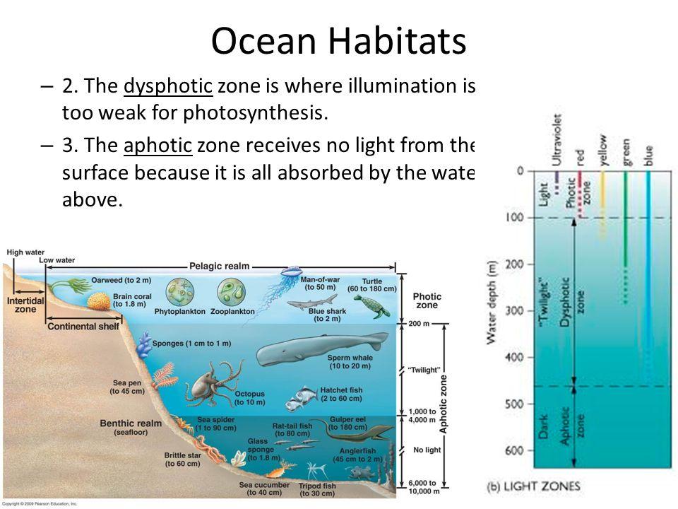 Classification of Organisms C.