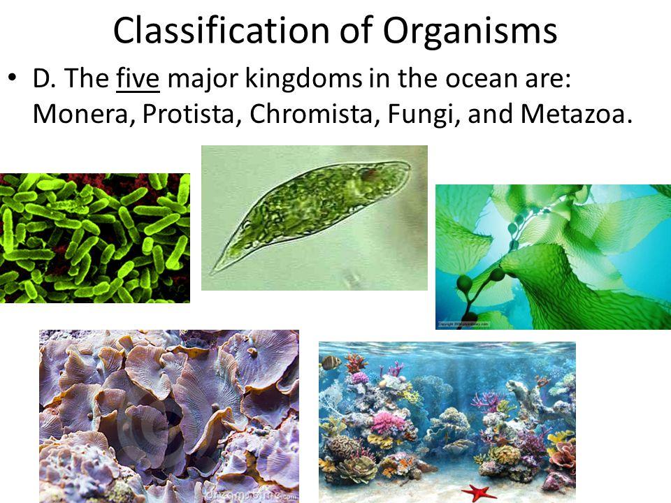 Classification of Organisms D. The five major kingdoms in the ocean are: Monera, Protista, Chromista, Fungi, and Metazoa.