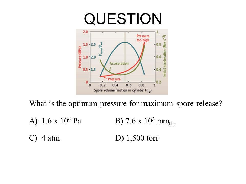 QUESTION What is the optimum acceleration for maximum spore release.