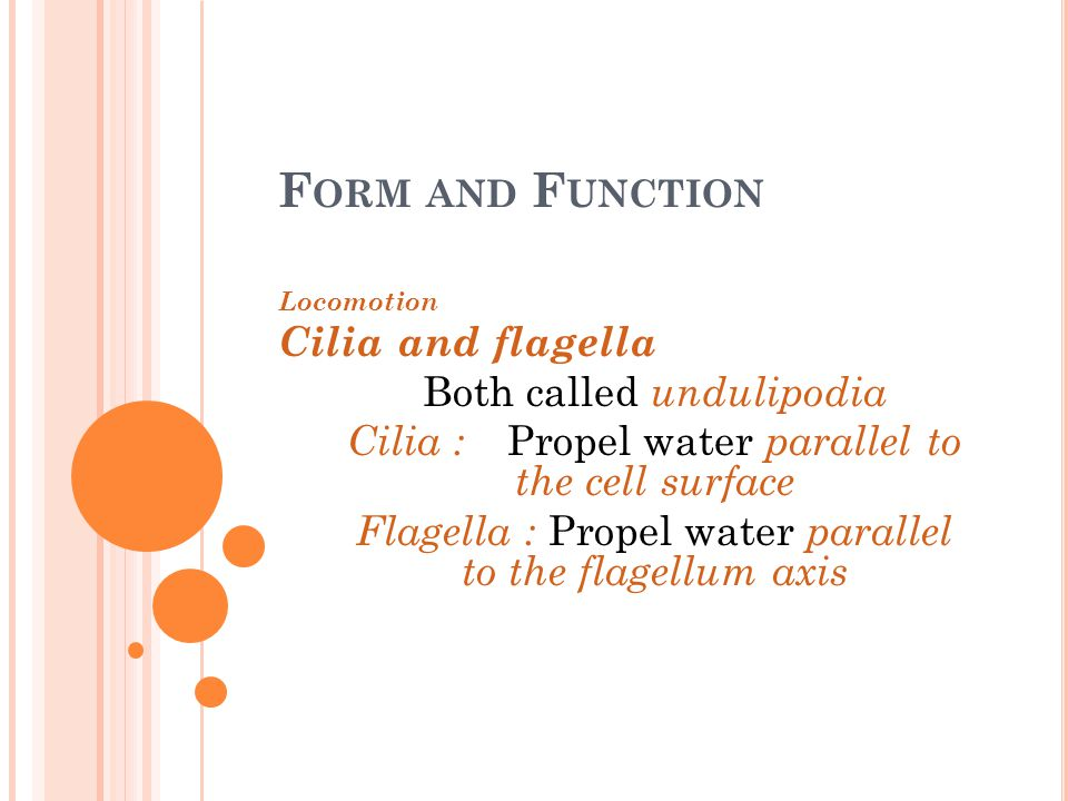 F ORM AND F UNCTION Locomotion Cilia and flagella Both called undulipodia Cilia : Propel water parallel to the cell surface Flagella : Propel water pa