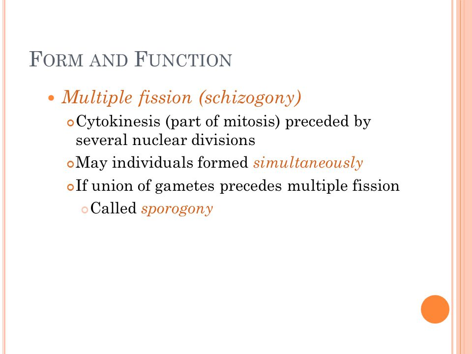 F ORM AND F UNCTION Multiple fission (schizogony) Cytokinesis (part of mitosis) preceded by several nuclear divisions May individuals formed simultane