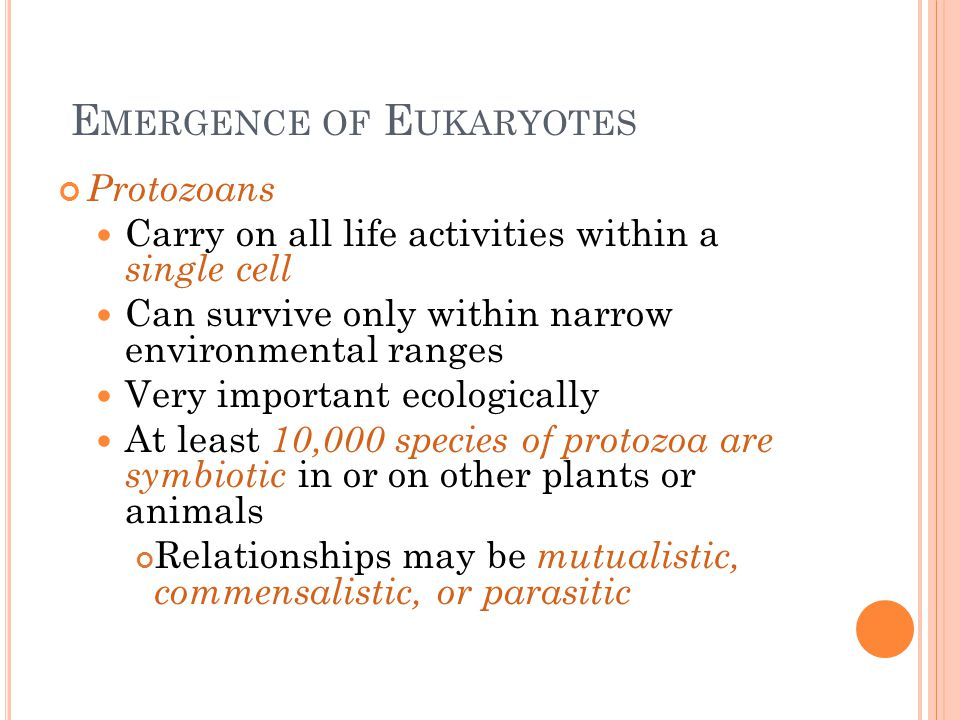 E MERGENCE OF E UKARYOTES Protozoans Carry on all life activities within a single cell Can survive only within narrow environmental ranges Very import