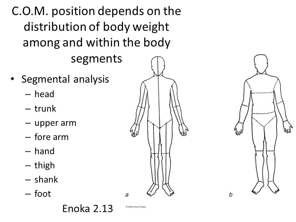 C.O.M. position depends on the distribution of body weight among and within the body segments Segmental analysis – head – trunk – upper arm – fore arm
