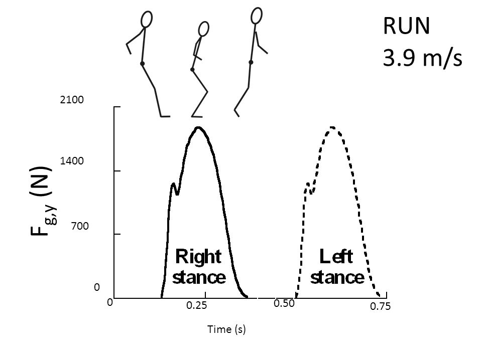 RUN 3.9 m/s 2100 1400 700 0 0 0.25 0.50 0.75 Time (s) F g,y (N)