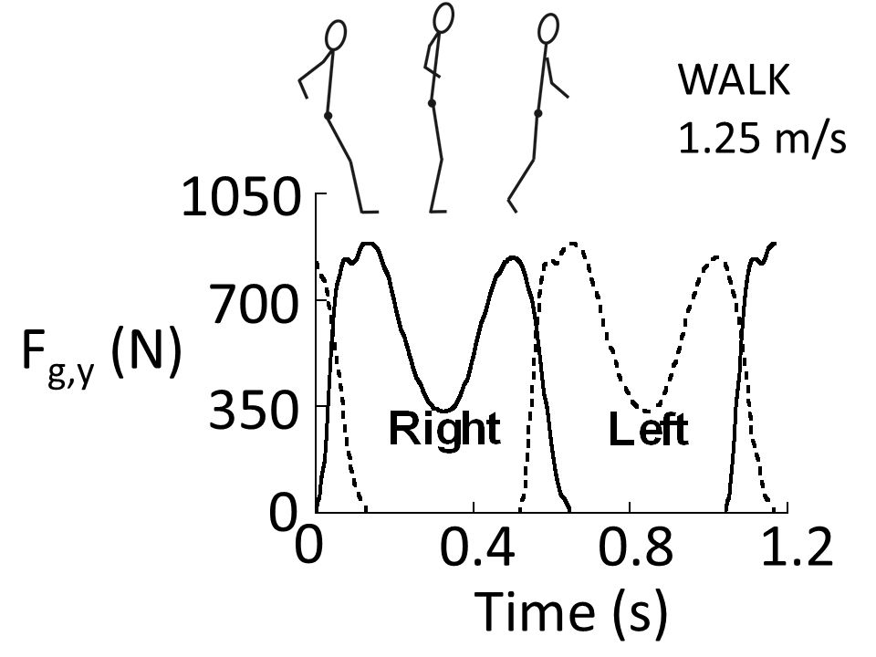 Time (s) WALK 1.25 m/s 0 700 F g,y (N) 0 0.40.81.2 350 1050
