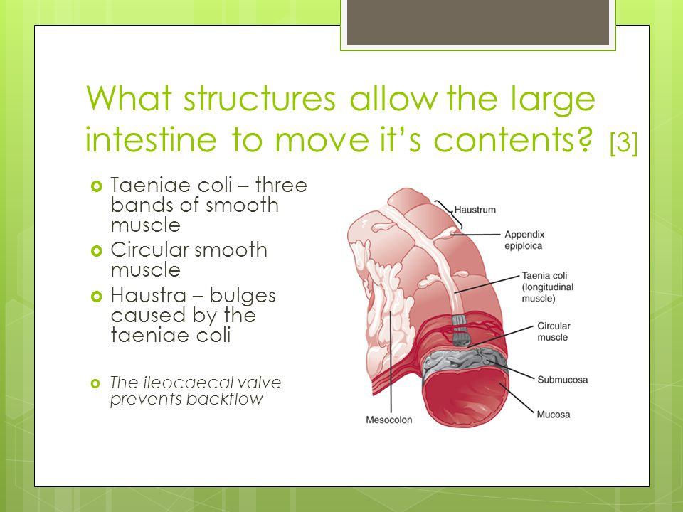 How does the large intestine move it's contents.