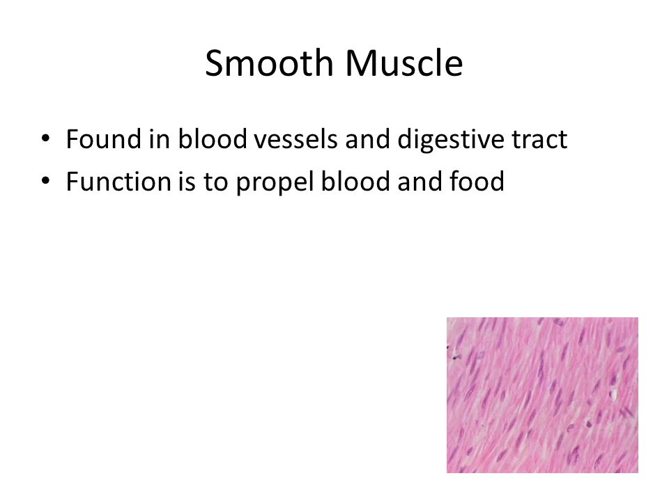 Smooth Muscle Found in blood vessels and digestive tract Function is to propel blood and food
