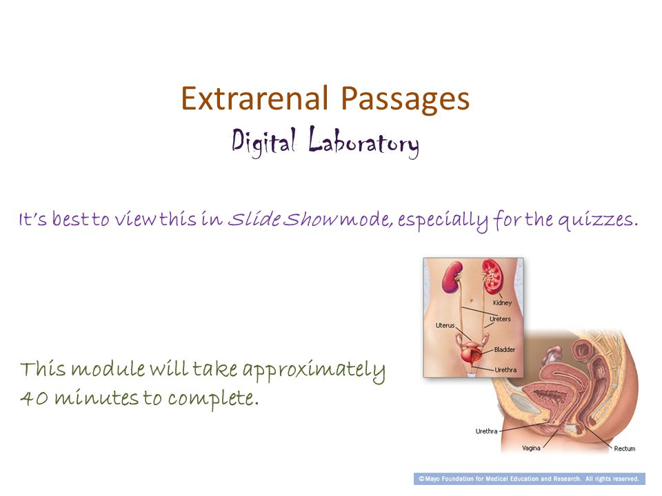 Extrarenal Passages Digital Laboratory It's best to view this in Slide Show mode, especially for the quizzes.