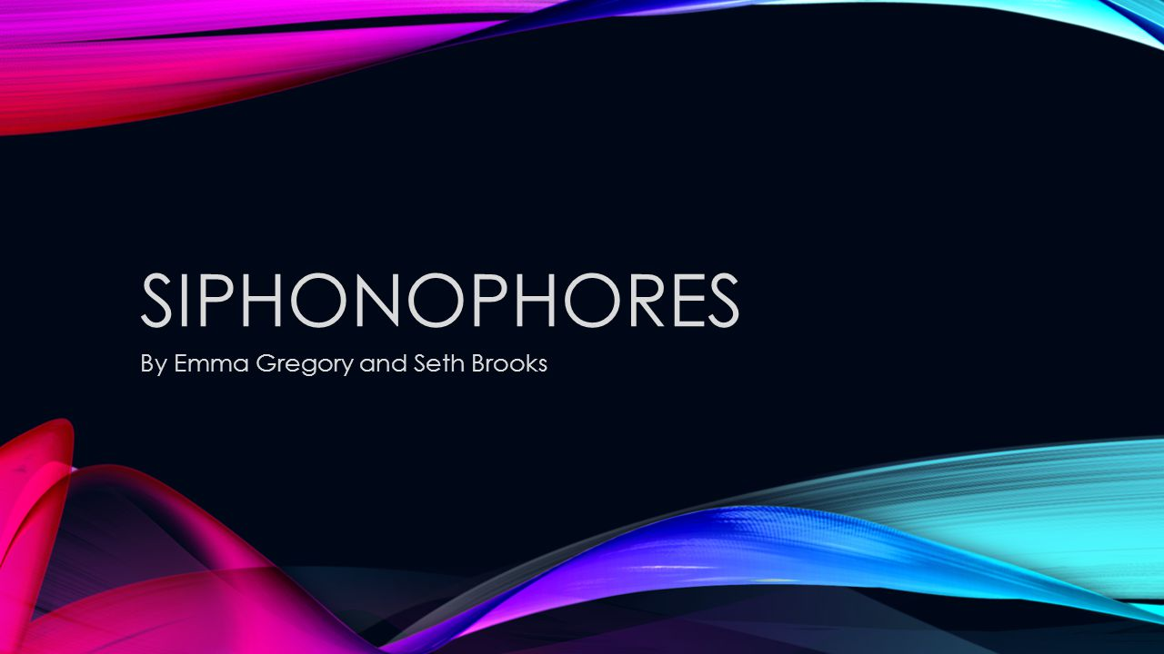 WHAT ARE SIPHONOPHORES.