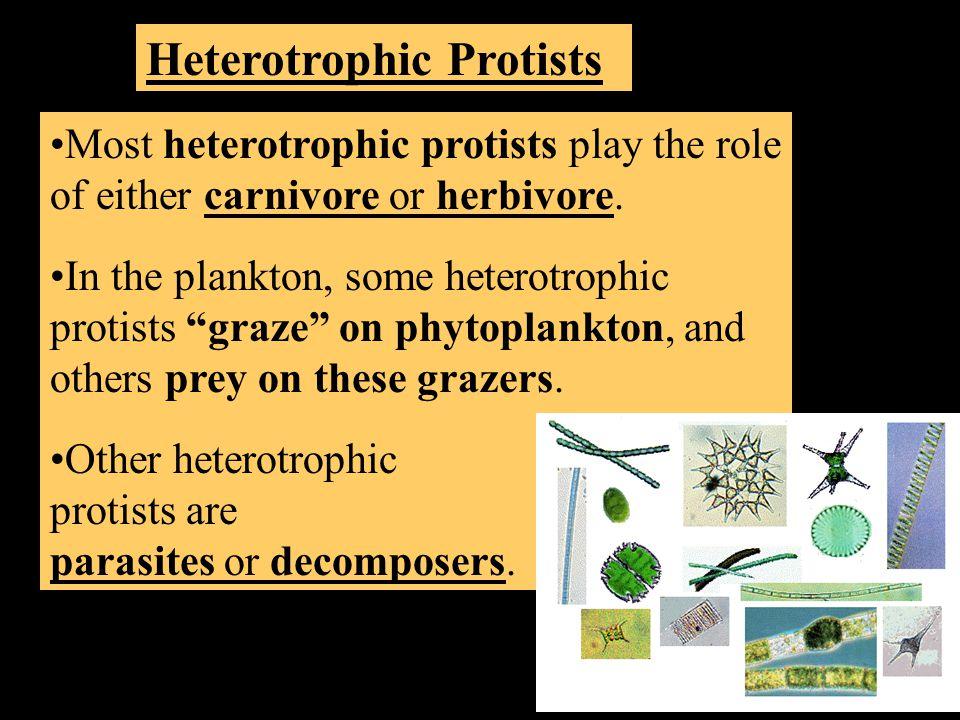 Heterotrophic Protists Most heterotrophic protists play the role of either carnivore or herbivore.