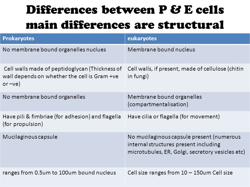 Differences between P & E cells main differences are structural Main differences are STRUCTURAL : Prokaryoteseukaryotes No membrane bound organelles n