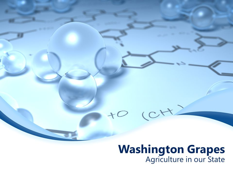 Washington Grapes Agriculture in our State