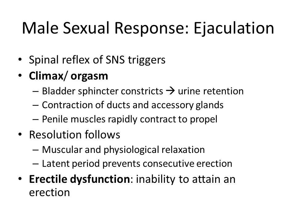 Male Sexual Response: Ejaculation Spinal reflex of SNS triggers Climax/ orgasm – Bladder sphincter constricts  urine retention – Contraction of ducts and accessory glands – Penile muscles rapidly contract to propel Resolution follows – Muscular and physiological relaxation – Latent period prevents consecutive erection Erectile dysfunction: inability to attain an erection