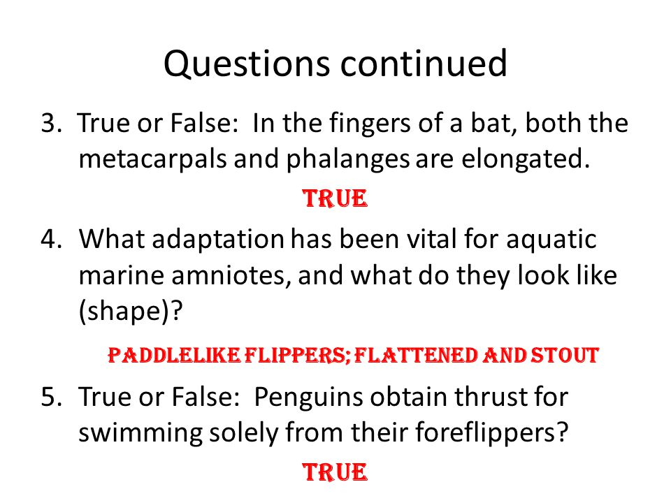 Questions continued 3. True or False: In the fingers of a bat, both the metacarpals and phalanges are elongated. True 4.What adaptation has been vital