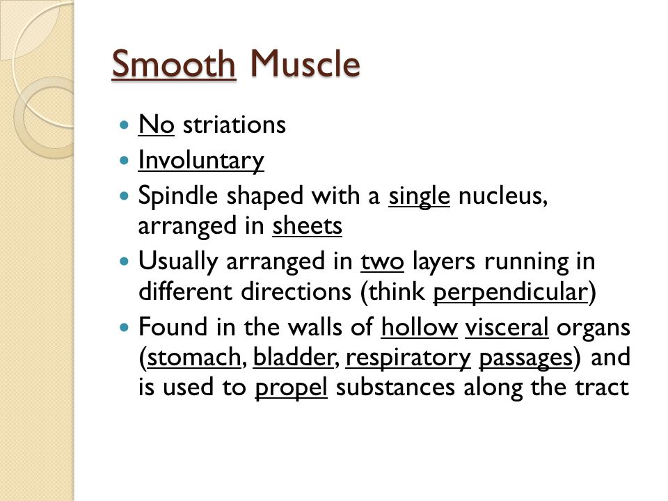 Smooth Muscle No striations Involuntary Spindle shaped with a single nucleus, arranged in sheets Usually arranged in two layers running in different directions (think perpendicular) Found in the walls of hollow visceral organs (stomach, bladder, respiratory passages) and is used to propel substances along the tract