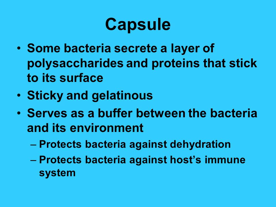 Capsule Some bacteria secrete a layer of polysaccharides and proteins that stick to its surface Sticky and gelatinous Serves as a buffer between the bacteria and its environment –Protects bacteria against dehydration –Protects bacteria against host's immune system