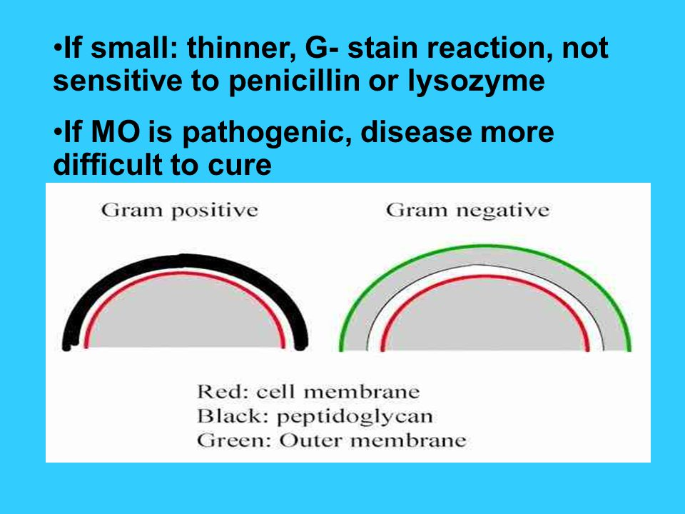 If small: thinner, G- stain reaction, not sensitive to penicillin or lysozyme If MO is pathogenic, disease more difficult to cure