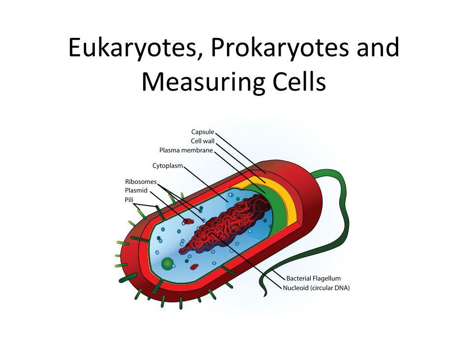 Eukaryotes, Prokaryotes and Measuring Cells