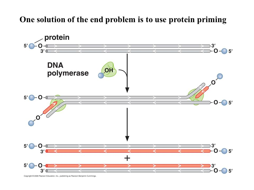 One solution of the end problem is to use protein priming