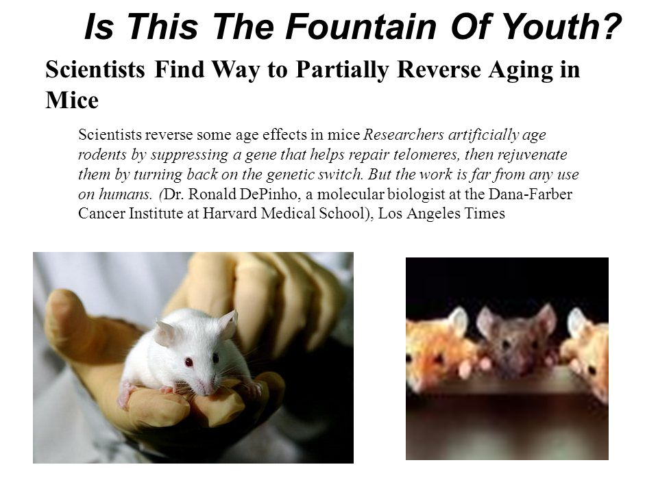 Scientists reverse some age effects in mice Researchers artificially age rodents by suppressing a gene that helps repair telomeres, then rejuvenate th
