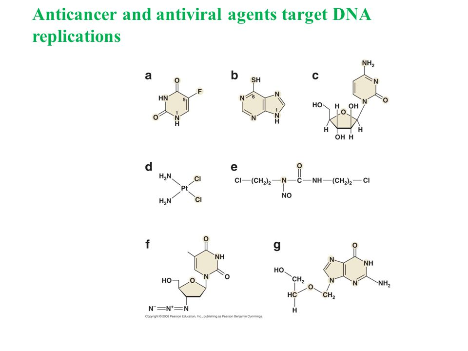 Anticancer and antiviral agents target DNA replications
