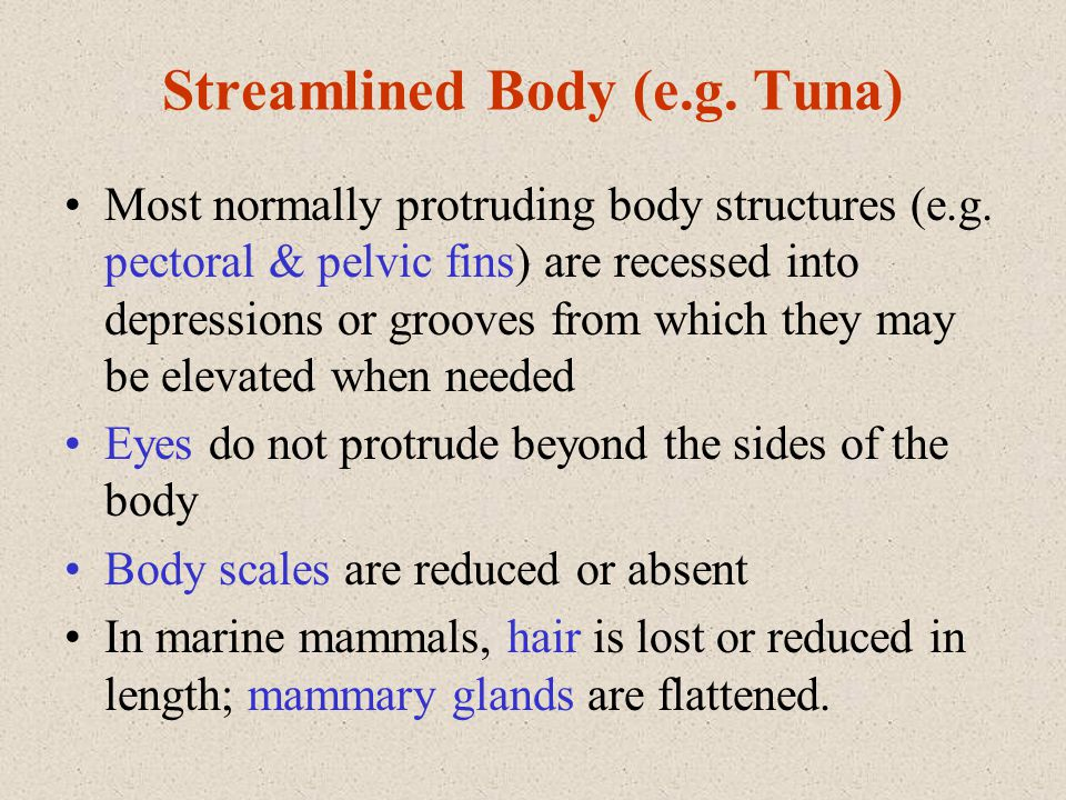 Streamlined Body (e.g. Tuna) Most normally protruding body structures (e.g. pectoral & pelvic fins) are recessed into depressions or grooves from whic