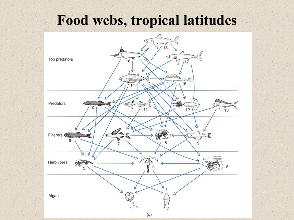Food webs, tropical latitudes
