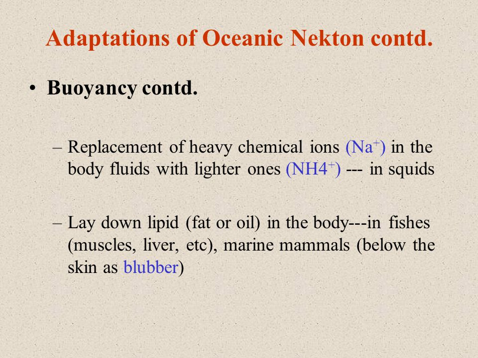 Adaptations of Oceanic Nekton contd. Buoyancy contd. –Replacement of heavy chemical ions (Na + ) in the body fluids with lighter ones (NH4 + ) --- in