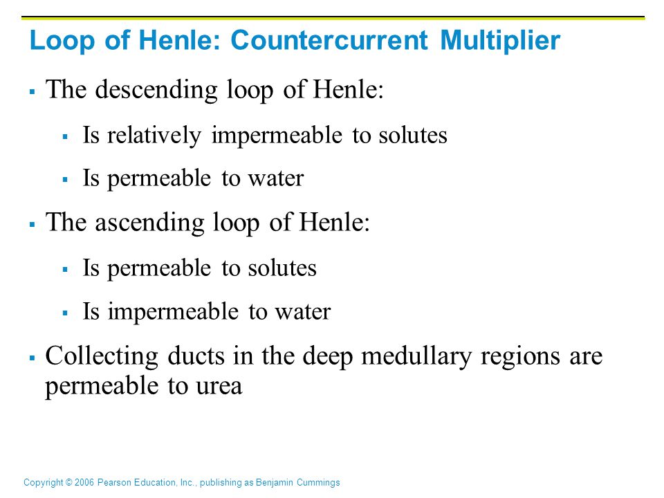 Copyright © 2006 Pearson Education, Inc., publishing as Benjamin Cummings Loop of Henle: Countercurrent Multiplier  The descending loop of Henle:  I