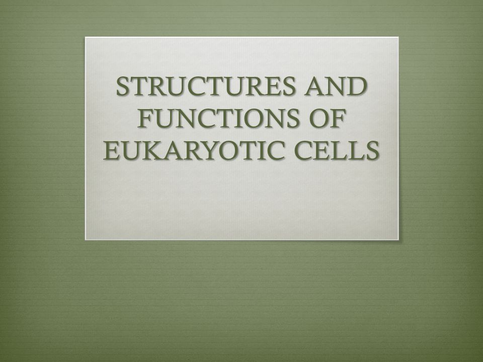 Recall: The kingdoms fungi, protista, plantae and animalia are all composed of eukaryotic cells Similarities: - Membrane bound nucleus with DNA - Cell membrane composed of a phospholipid bilayer - Cytoplasm filled interior (everything outside the nucleus but within the cell membrane – cytosol, organelles, molecules, ions)