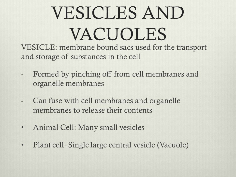 VESICLES AND VACUOLES VESICLE: membrane bound sacs used for the transport and storage of substances in the cell - Formed by pinching off from cell mem
