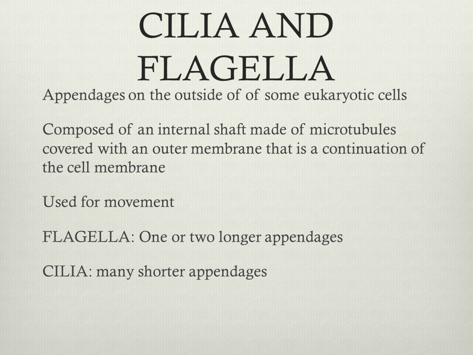 CILIA AND FLAGELLA Appendages on the outside of of some eukaryotic cells Composed of an internal shaft made of microtubules covered with an outer memb