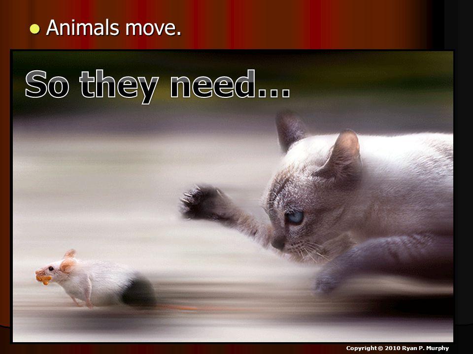 Animals move. Animals move. Copyright © 2010 Ryan P. Murphy