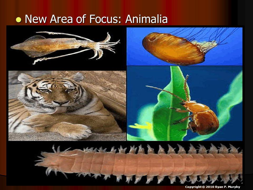 New Area of Focus: Animalia New Area of Focus: Animalia Copyright © 2010 Ryan P. Murphy
