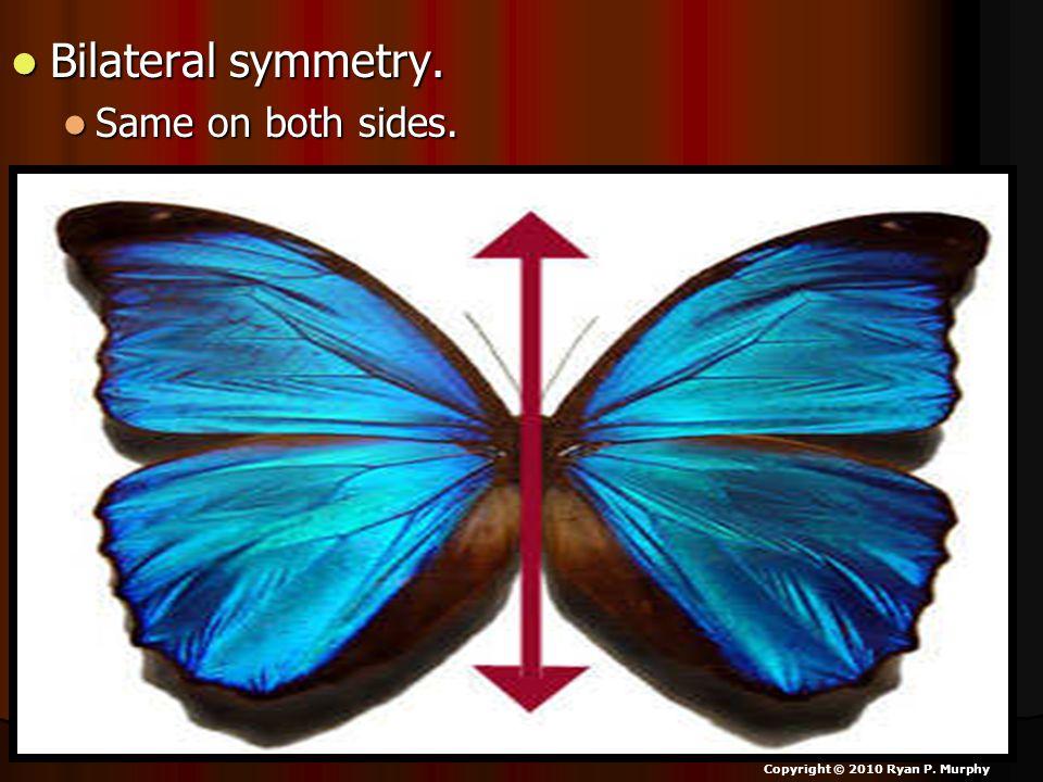 Bilateral symmetry. Bilateral symmetry. Same on both sides.