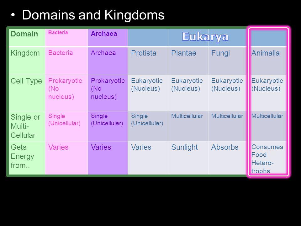 Domains and Kingdoms Domain Bacteria Archaea Kingdom BacteriaArchaea ProtistaPlantaeFungiAnimalia Cell Type Prokaryotic (No nucleus) Eukaryotic (Nucleus) Single or Multi- Cellular Single (Unicellular) Single (Unicellular) Single (Unicellular) Multicellular Gets Energy from..