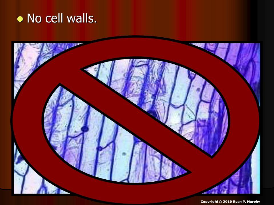 No cell walls. No cell walls. Copyright © 2010 Ryan P. Murphy