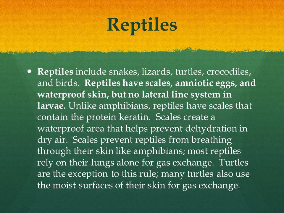 Reptiles Reptiles include snakes, lizards, turtles, crocodiles, and birds. Reptiles have scales, amniotic eggs, and waterproof skin, but no lateral li