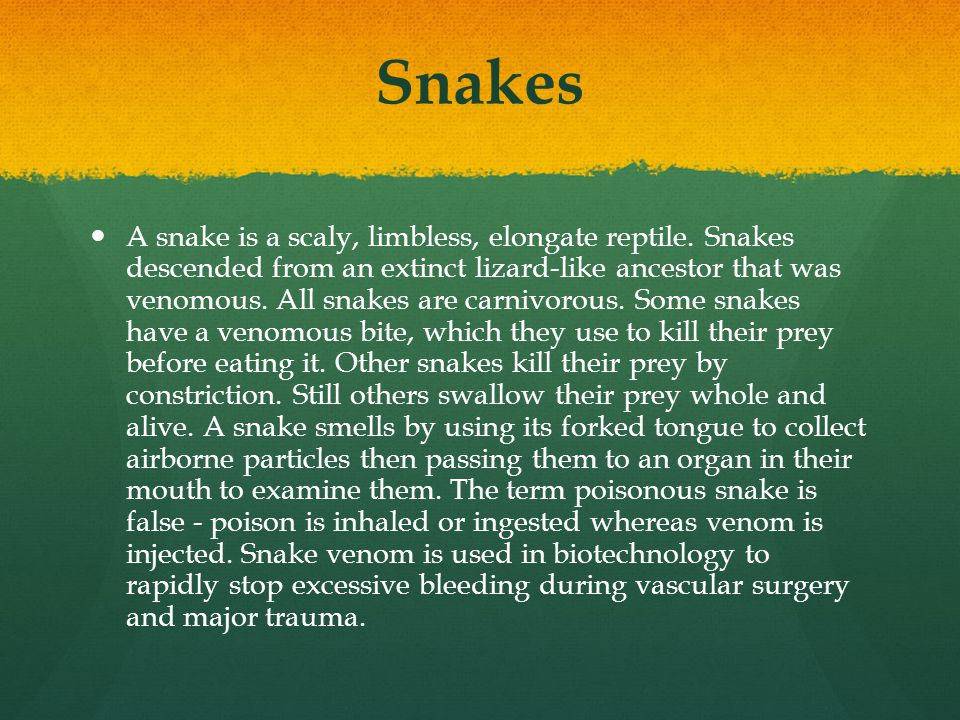 Snakes A snake is a scaly, limbless, elongate reptile. Snakes descended from an extinct lizard-like ancestor that was venomous. All snakes are carnivo