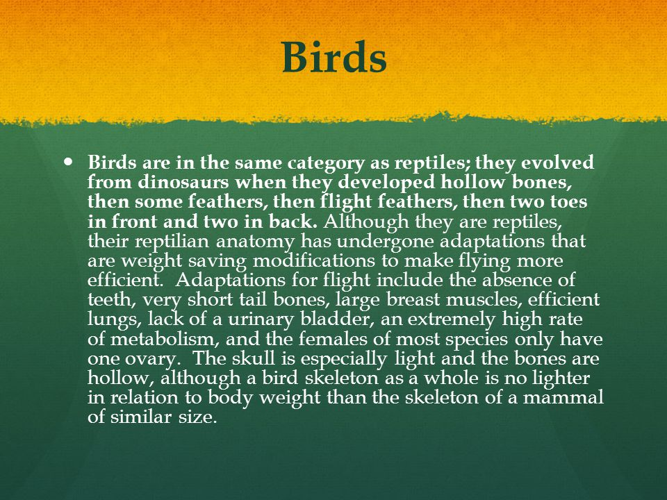 Birds Birds are in the same category as reptiles; they evolved from dinosaurs when they developed hollow bones, then some feathers, then flight feathe