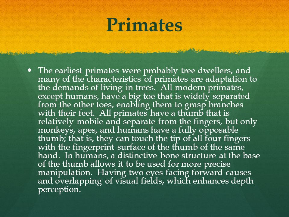 Primates The earliest primates were probably tree dwellers, and many of the characteristics of primates are adaptation to the demands of living in tre
