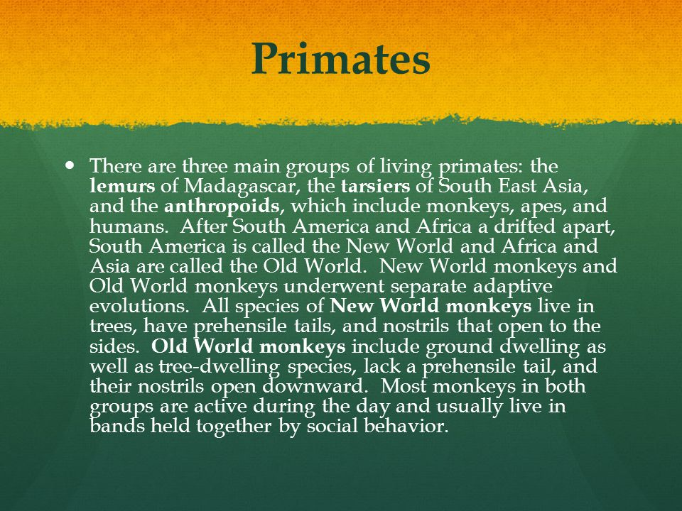 Primates There are three main groups of living primates: the lemurs of Madagascar, the tarsiers of South East Asia, and the anthropoids, which include