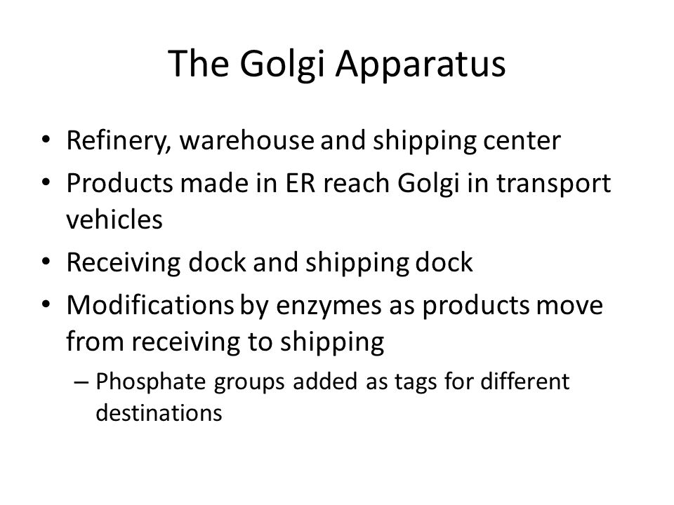 The Golgi Apparatus Refinery, warehouse and shipping center Products made in ER reach Golgi in transport vehicles Receiving dock and shipping dock Mod