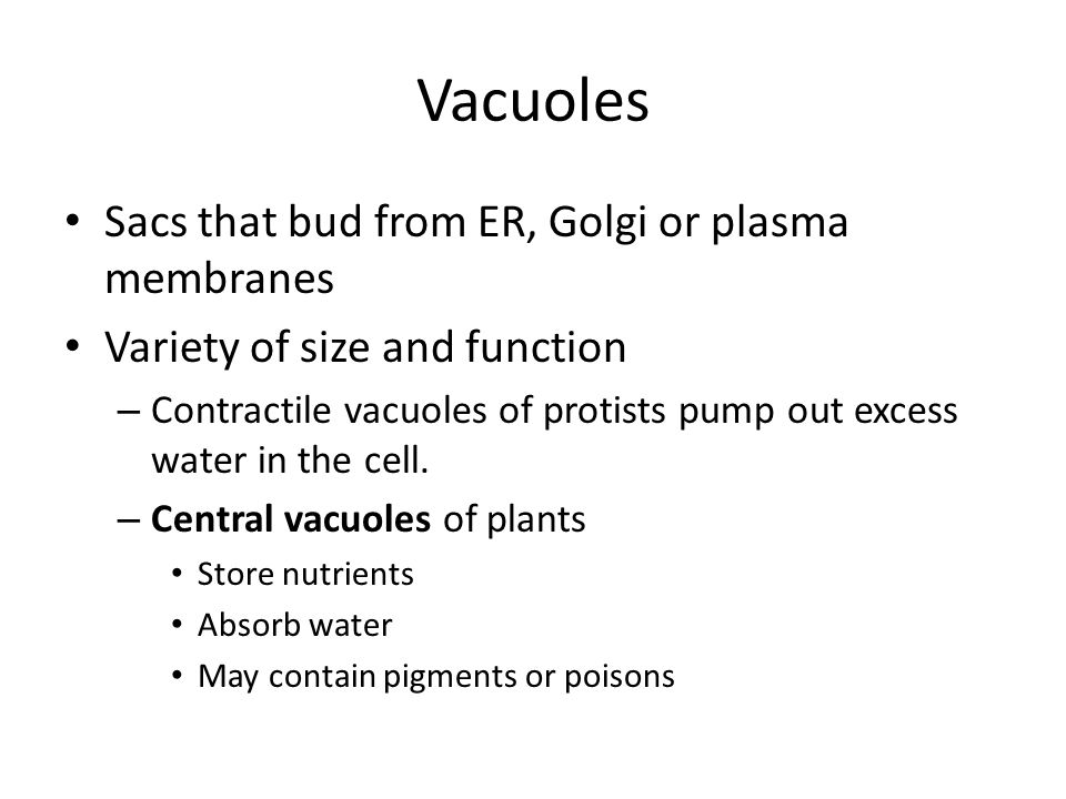 Vacuoles Sacs that bud from ER, Golgi or plasma membranes Variety of size and function – Contractile vacuoles of protists pump out excess water in the