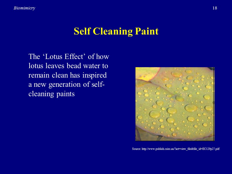 18Biomimicry Self Cleaning Paint The 'Lotus Effect' of how lotus leaves bead water to remain clean has inspired a new generation of self- cleaning paints Source: http://www.publish.csiro.au/ act=view_file&file_id=EC129p27.pdf