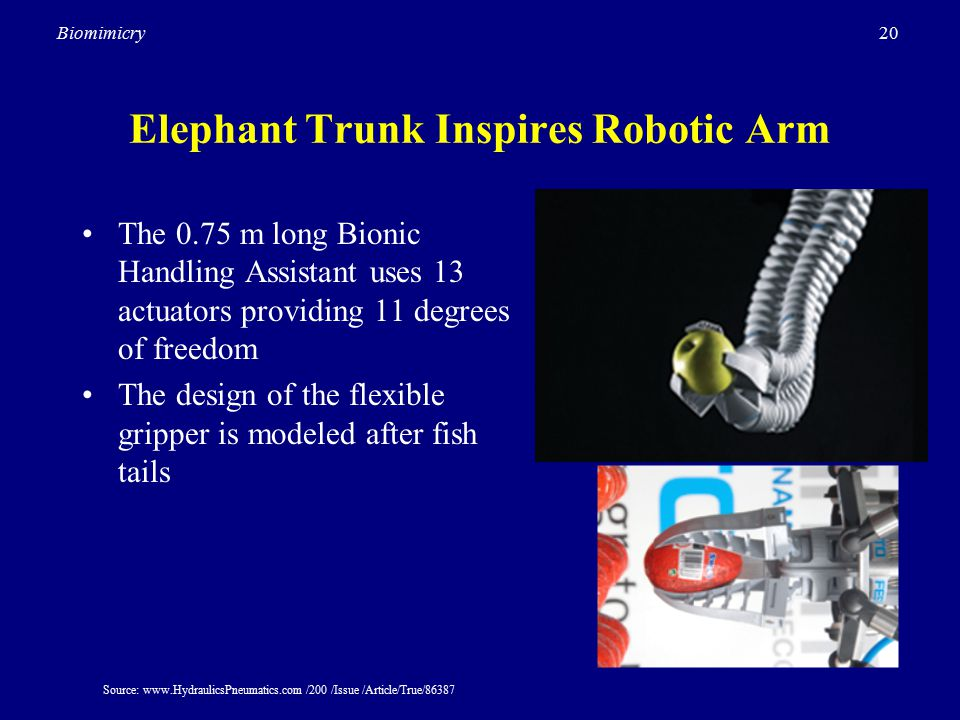 20Biomimicry Elephant Trunk Inspires Robotic Arm The 0.75 m long Bionic Handling Assistant uses 13 actuators providing 11 degrees of freedom The design of the flexible gripper is modeled after fish tails Source: www.HydraulicsPneumatics.com /200 /Issue /Article/True/86387